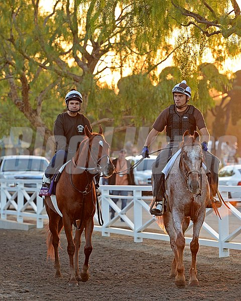 Caption:  Home Run Kitten walks back to barn area from paddock