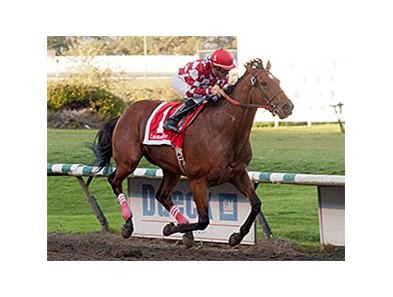 Commander winning the BC Premiers Stakes.