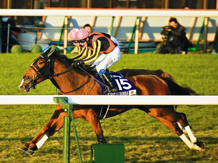Gentildonna (Deep Impact x Donna Blini, Bertolini) wins a duel with Horse of the Year Orfevre in the final moments of the 32nd Japan Cup at Tokyo Racecourse on November 25th, 2012.