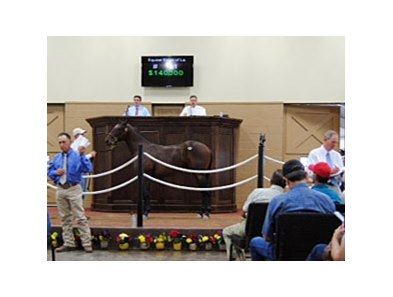 Equine Sales Company Consignor Select Yearling Sale Topper.