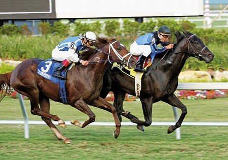 Einstein, #4, and Jockey Rafael Bejarano defeated Go Deputy #3 and John Velazquez in a thrilling stretch duel to win the $250,000 Gulfstream Park Breeders' Cup Turf (gr. IT) Saturday February 25, 2006.
