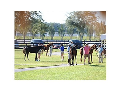 OBS Fall Mixed Sale