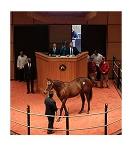 Hip 278, by Harlan's Holiday, sold for $250,000.