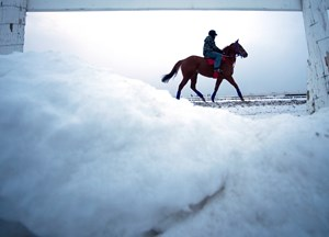 Winter training at Woodbine Racetrack.