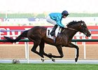 Brown Panther cruises to victory in the Dubai Gold Cup.