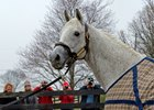 Fans welcome and take photos of Silver Charm at Old Friends.