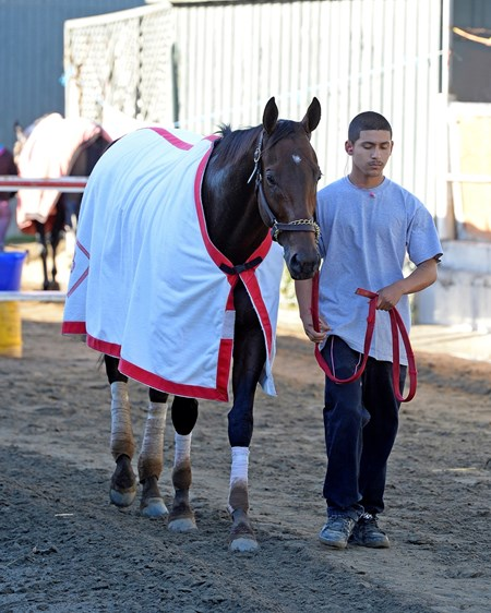 Caption:  Big Macher hotwalking