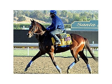 "Paynter will stand his first season at WinStar for a fee of $25,000.<br><a target=""blank"" href=""http://photos.bloodhorse.com/BreedersCup/2013-Breeders-Cup/Breeders-Cup/32986083_QMHXWK#!i=2874000456&k=W4j4p8K"">Order This Photo</a>"