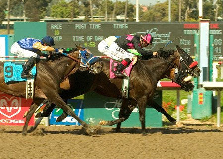 Lava Man and jockey Corey Nakatani fight back near the wire to nose out A.P. Xcellent  (inside) winning the Grade I $750,000 Hollywood Gold Cup on June 30, 2007 at Hollywood Park joining Native Diver as the only other horse to win three-straight Hollywood Gold Cups.