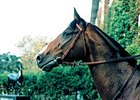 Hernando