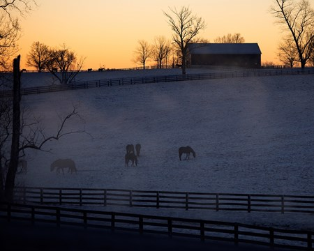 Steam rises from a stream at sunrise as mares graze  in a field on Mill Ridge Farm near Lexington, Kentucky.