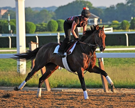 Kentucky Derby winner Orb, stretches his legs Saturday morning at Belmont Park...