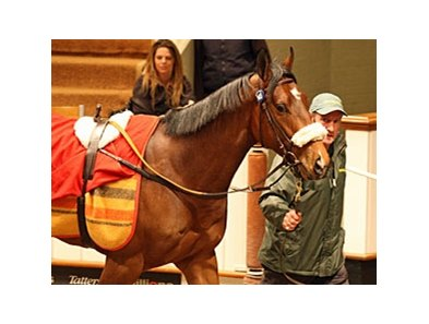 Lot #148, an Elusive Quality colt, sold for 760,000 guineas (US$1,215,999) at the Tattersalls Craven sale.