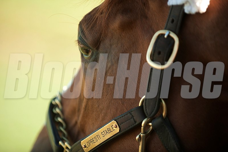 Wise Dan at Woodbine.