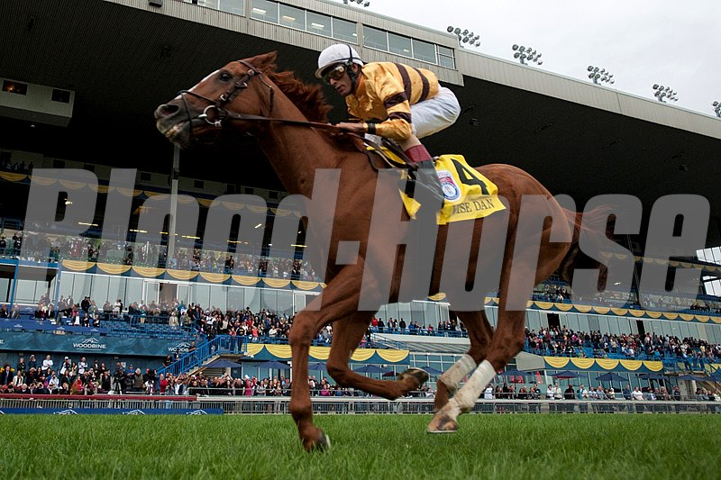 Wise Dan winning the Woodbine Mile.