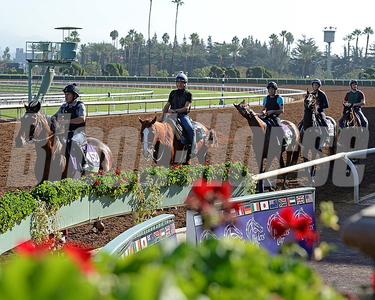Caption:  Anodin leads group of European horses on the track for the first time