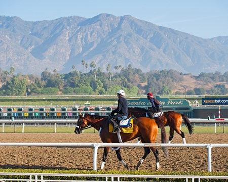 Caption:  Mucho Macho Man and the San Gabriel Mountains at Santa Anita