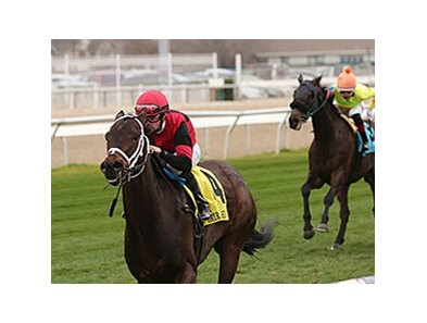 Chocolate Ride will try for a third graded victory on the grass in less than 12 months Jan. 16 in the Colonel E. R. Bradley Handicap.