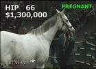 Keeneland Nov. Sale 2014 - Hip 66 - Egg Drop