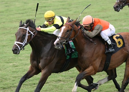 Hudson Steele is victorious in The 13th Running of the Da Hoss Stakes at Colonial Downs.  New Kent, Virginia.