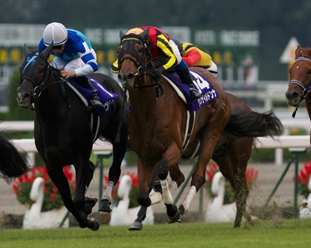 Gentildonna (Deep Impact x Donna Blini, Bertolini) becomes Japan's 4th filly to win the Filly Triple Crown when she narrowly defeated arch rival Verxina in the G1 Shuka Sho on October 14th 2012 at Kyoto Racecourse.