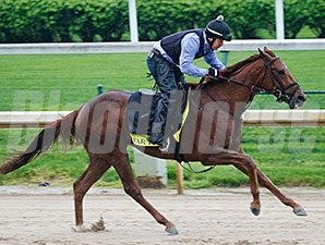 Far Right gallops at Churchill Downs April 19.