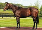 Awesome Again, one of the many top sires in Kentucky who is an outcross.