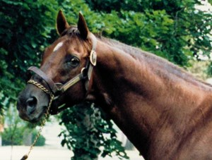 Alydar profile in 1990.