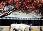 Keeneland Sale Still Outpacing 2013 Numbers