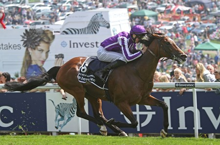 St Nicholas Abbey, bred in Ireland by Barton Bloodstock and Villiers Syndicate, was produced from the Sure Blade mare Leaping Water. He was campaigned in all his starts by Coolmore's Susan Magnier, Michael Tabor, and Derrick Smith.
