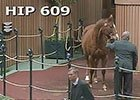 Keeneland January: Hip 609 in the Ring