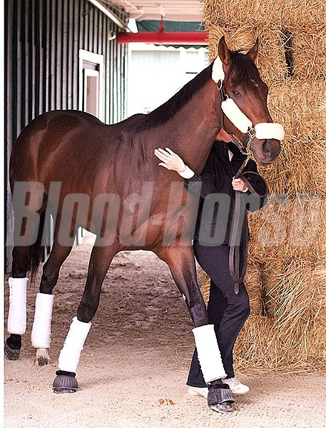 Orb Arrives at Pimlico