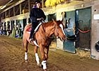 Wise Dan Back Under Tack March 4, 2015