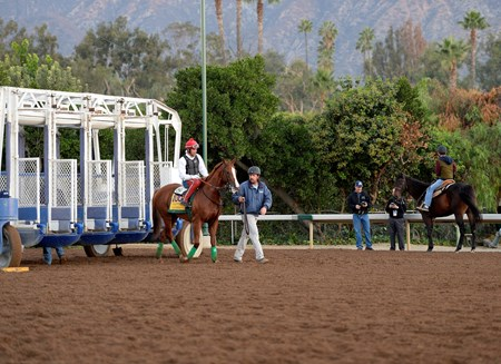 Caption:  California Chrome schools at the gate
