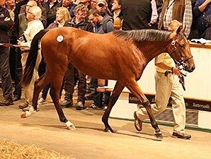 Record Price for Galileo Son at Tattersalls