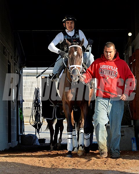 Caption: Vicar's In Trouble heads out of his barn to go to the track.