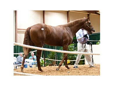 The sale topper, a chestnut yearling colt by Awesome Again, brought $210,000.