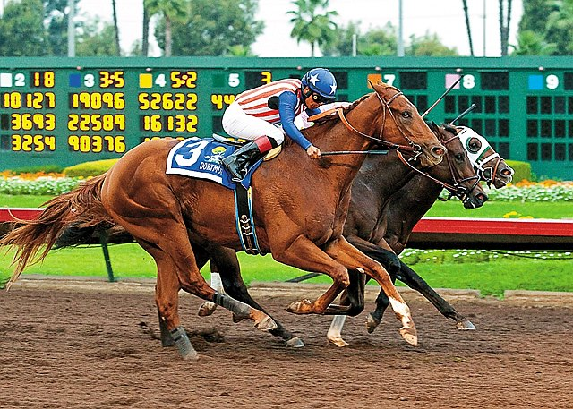 Odds-on choice Dortmund remained unbeaten by a slim margin as he nipped Firing Line and Mr. Z by a head in a nail-biting finish to the first-ever $500,000 Grade I Los Alamitos Futurity at the Orange County, California track.