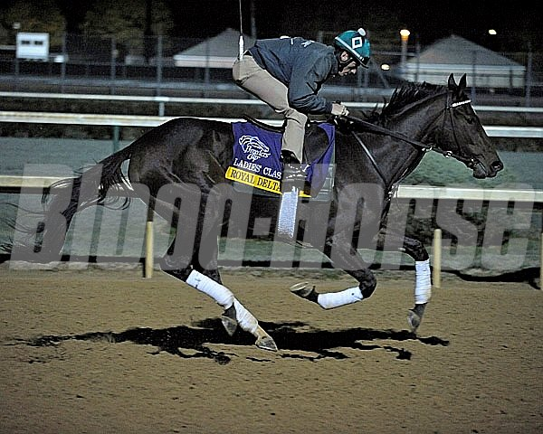 Royal Delta works towards the Breeders' Cup at Churchill Downs in Louisville, Kentucky on Oct. 29, 2011.
