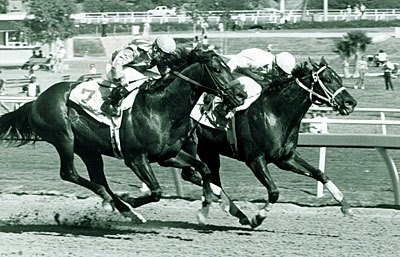 Eillo goes gate-to-wire to take the first Breeders' Cup Sprint under Jockey Craig Perret. He later was named Champion Sprinter for 1984.