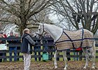 Kentucky Derby winner Silver Charm at Old Friends Farm.
