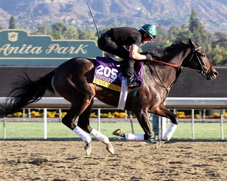 Royal Delta on the track at Santa Anita Park on October 30, 2013.