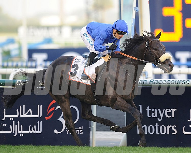 Calvaryman running in the Dubai Gold Cup.