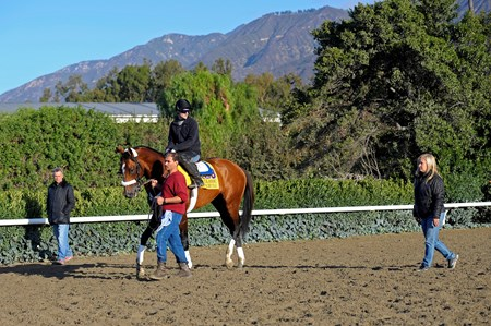 Caption:  Mucho Macho Man with trainer Kathy Ritvo after practising at the gate.  Husband Tim Ritvo at left. 