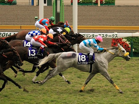 Snow Dragon scored a major upset in the $1.9 million Sprinters Stakes (Jpn-I) in a light rain at Japan's Niigata Racecourse, registering his first graded victory.