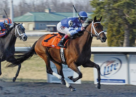 Aurelia's Belle, returned to Polytrack after three tough graded stakes at Gulfstream Park, swept past favored Sloane Square at mid-stretch to post a 2 1/4-length win in the $125,000 Grade III Pure Romance Bourbonette Oaks at Turfway Park.