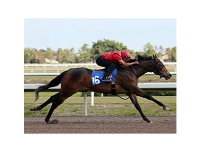 "Hip No. 16, filly by Malibu Moon, out of Miz United States, worked an eighth in 10 seconds flat.<br><a target=""blank"" href=""http://photos.bloodhorse.com/Workouts/Fasig-Tipton-Florida-Sale/28552472_78FLM8#!i=2420931313&k=jF2rxwX"">Order This Photo</a>"