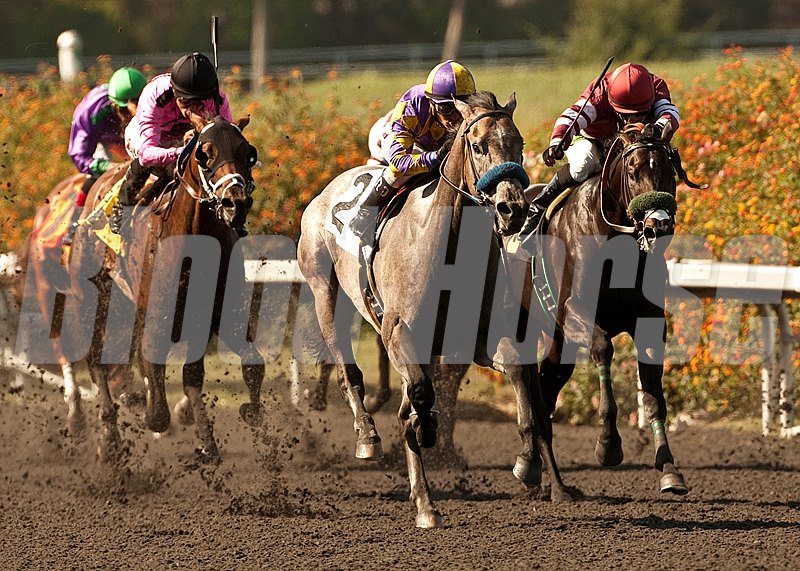 Kobe's Back and jockey Rafael Bejarano, second from right, overpower Willie B Awesome (Martin Pedroza), right, and Solid Wager (Edwin Maldonado), left, to win the $100,000 Willard L. Proctor Memorial Stakes, at Betfair Hollywood Park, Inglewood CA.