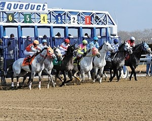 Gray Feeling: A starter handicap for grays and roans was run at Aqueduct Feb. 3; Good Karma, No. 6, was the half-length winner, paying $29.
