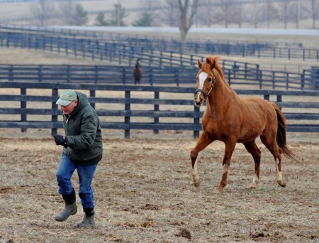 Caption: Having fun, Blowen goes into the paddock and (with a head start) runs with Marquetry.